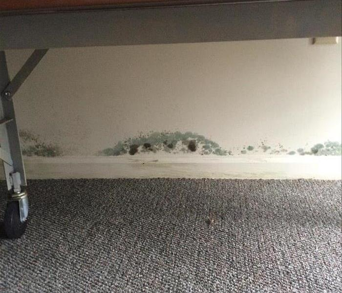 Mold Remediation-Basement Mold Before