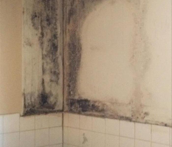 Mold Remediation Prevent Bathroom Mold