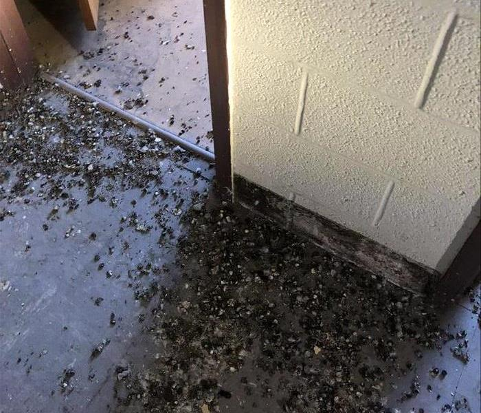 Why SERVPRO SERVPRO-A Specialty Cleaning Company (Pigeon Dung)